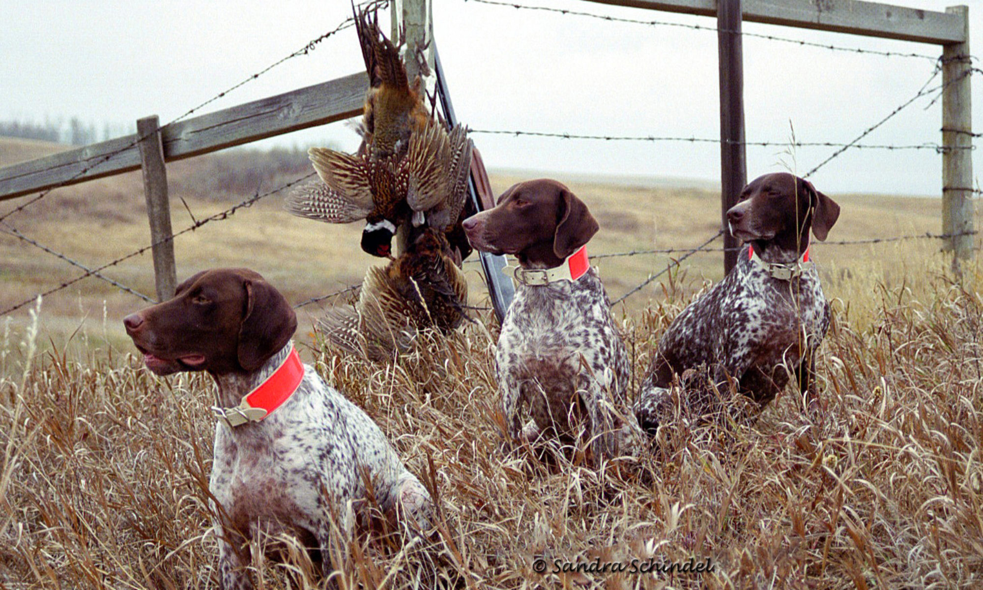 Quebec – German Shorthaired Pointer Club of Canada